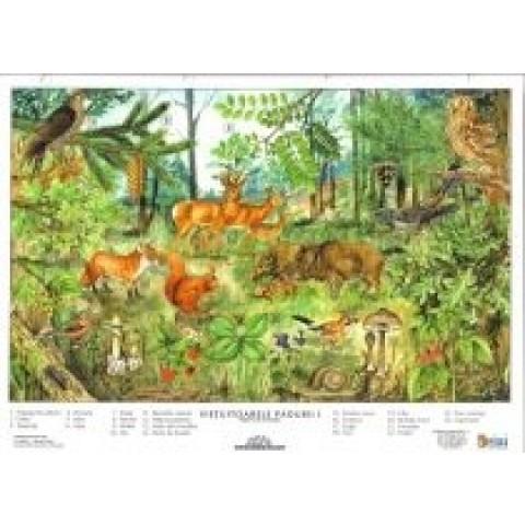 Vieţuitoarele pădurii