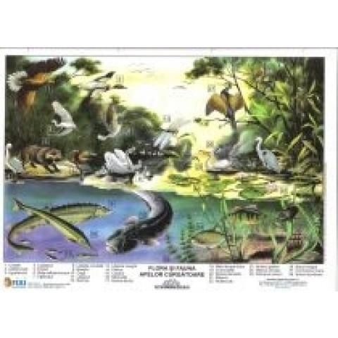 Flora şi fauna apelor curgătoare