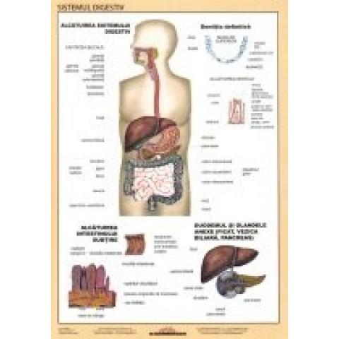 Sistemul digestiv