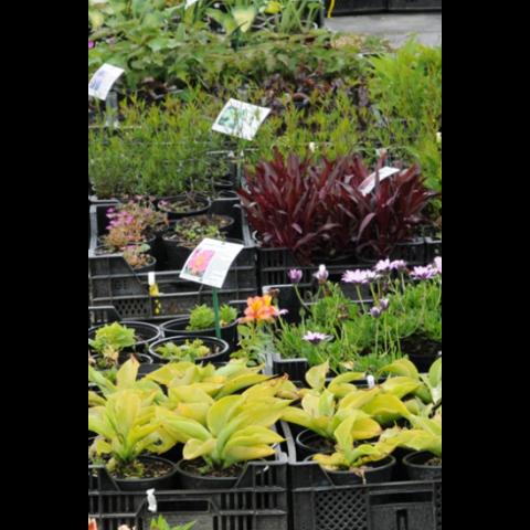 Tag plante, 120 μ, 160 g/mp, A4, 100 coli